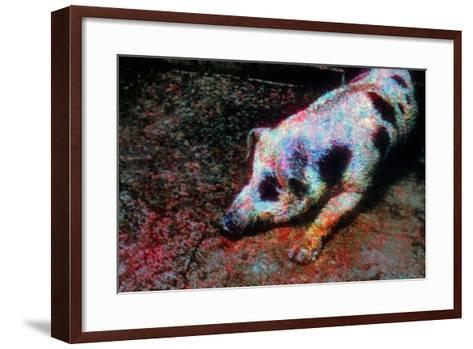 Pig-Andr? Burian-Framed Art Print