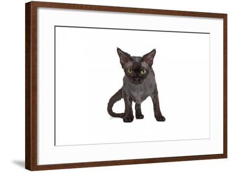 Devon Rex Cat-Fabio Petroni-Framed Art Print
