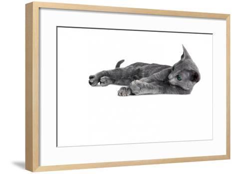 Blue Russia Cat-Fabio Petroni-Framed Art Print