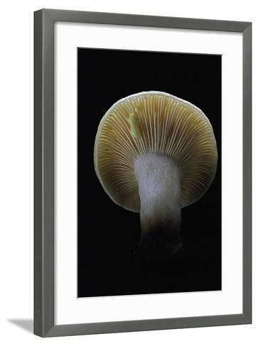 Lactarius Decipiens (Milk-Cap)-Paul Starosta-Framed Art Print
