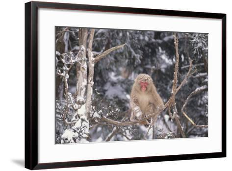 Japanese Macaque Perched on Tree-DLILLC-Framed Art Print