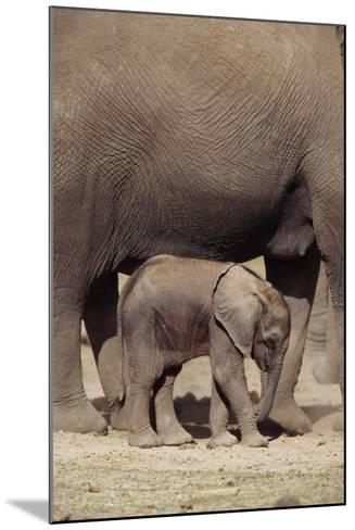 Elephant Baby by Mother-DLILLC-Mounted Photographic Print