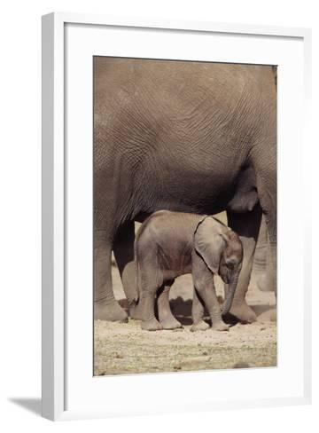 Elephant Baby by Mother-DLILLC-Framed Art Print