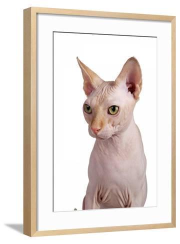 Sphinx Cat-Fabio Petroni-Framed Art Print