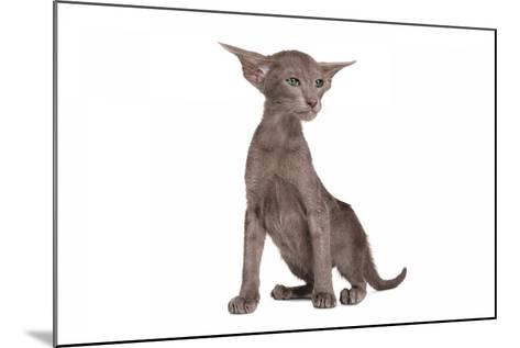 Oriental Cat-Fabio Petroni-Mounted Photographic Print