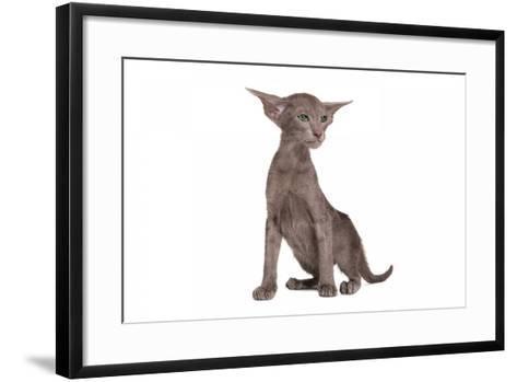 Oriental Cat-Fabio Petroni-Framed Art Print