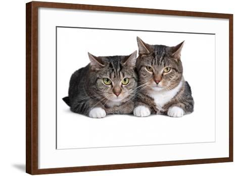 American Curl Cat-Fabio Petroni-Framed Art Print