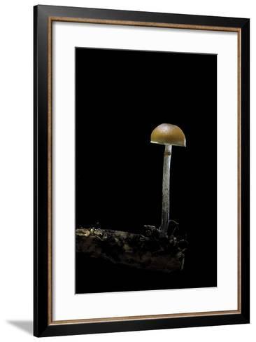 Galerina Marginata (Funeral Bell)-Paul Starosta-Framed Art Print
