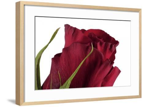 Roses-Fabio Petroni-Framed Art Print