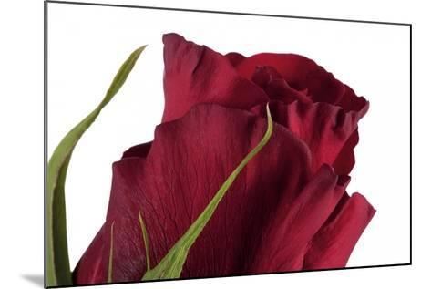 Roses-Fabio Petroni-Mounted Photographic Print