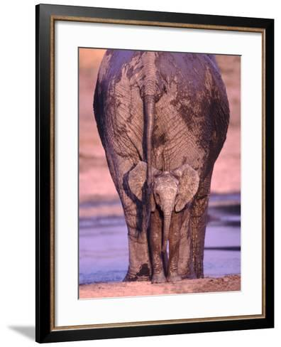 African Elephants-DLILLC-Framed Art Print