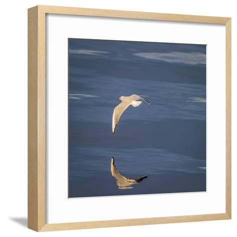 Seagull Flying over the Sea-Arctic-Images-Framed Art Print