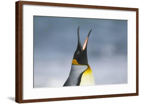 King Penguin Calling Out-DLILLC-Framed Art Print