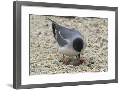 Gull Protecting Egg-DLILLC-Framed Art Print