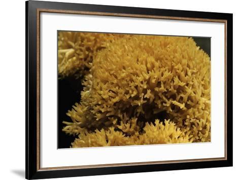 Ramaria Flavescens (Coral Fungus)-Paul Starosta-Framed Art Print
