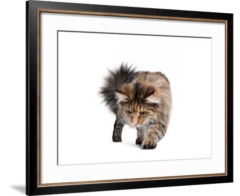 Norwegian Forest Cat-Fabio Petroni-Framed Art Print