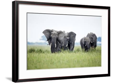 An Elephant Herd in Grassland-Richard Du Toit-Framed Art Print