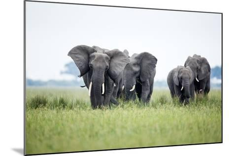 An Elephant Herd in Grassland-Richard Du Toit-Mounted Photographic Print