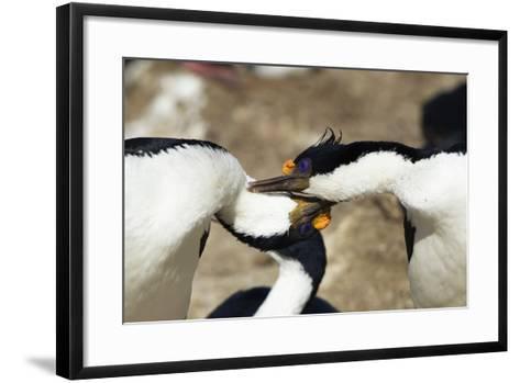 King Cormorant-Joe McDonald-Framed Art Print