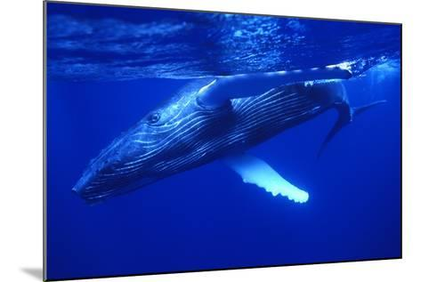 Humpback Whale Swimming Underwater-DLILLC-Mounted Photographic Print