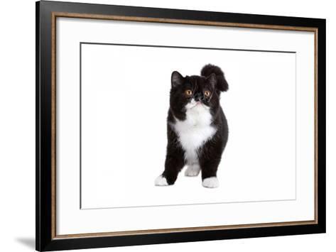 Exotic Cat-Fabio Petroni-Framed Art Print