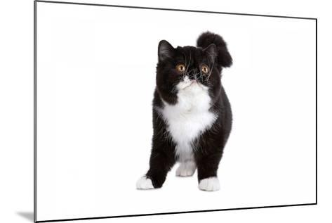 Exotic Cat-Fabio Petroni-Mounted Photographic Print