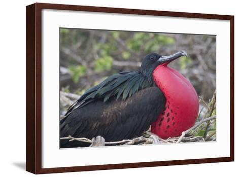 Frigatebird-DLILLC-Framed Art Print