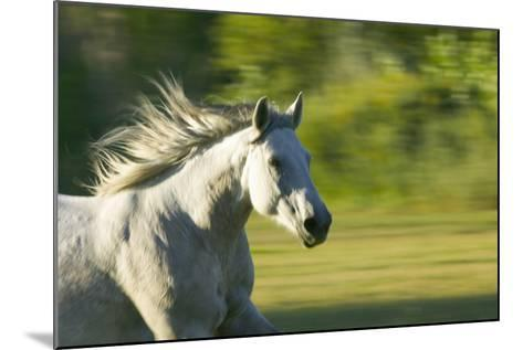 Galloping Horse-DLILLC-Mounted Photographic Print