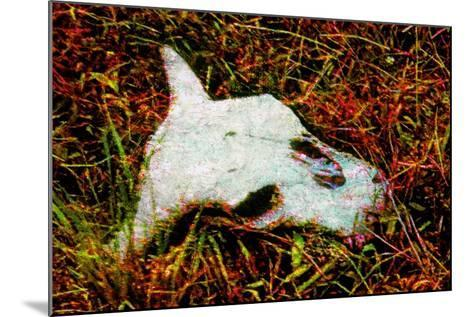 Cow Skull-Andr? Burian-Mounted Photographic Print