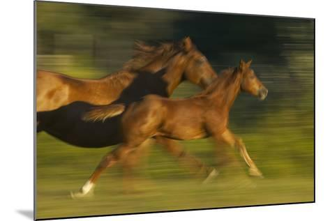 Mare Running with Colt-DLILLC-Mounted Photographic Print