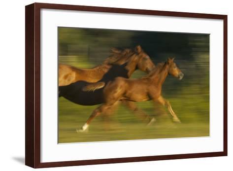Mare Running with Colt-DLILLC-Framed Art Print