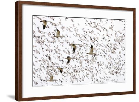Geese Flying in Formation-DLILLC-Framed Art Print
