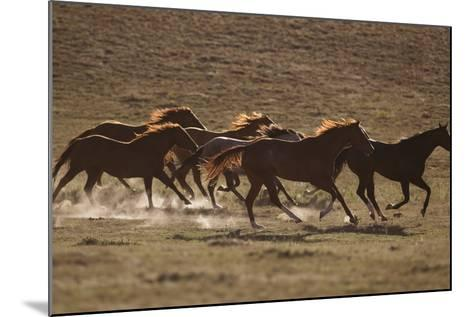 Herd of Stampeding Horses-DLILLC-Mounted Photographic Print