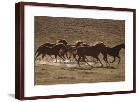 Herd of Stampeding Horses-DLILLC-Framed Art Print