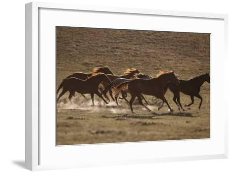 Herd of Stampeding Horses-DLILLC-Framed Art Print
