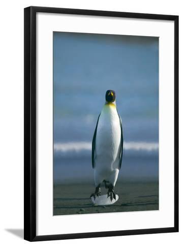 King Penguin Cooling Feet-DLILLC-Framed Art Print