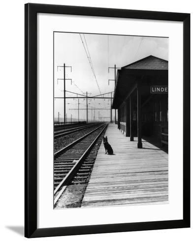Dog Waiting at Empty Railroad Platform--Framed Art Print
