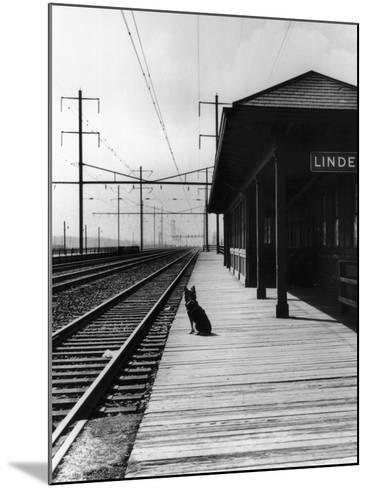 Dog Waiting at Empty Railroad Platform--Mounted Photographic Print