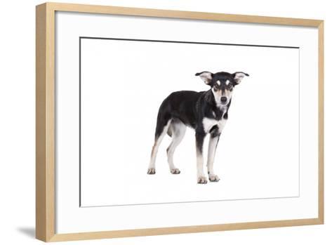 Mutt-Fabio Petroni-Framed Art Print