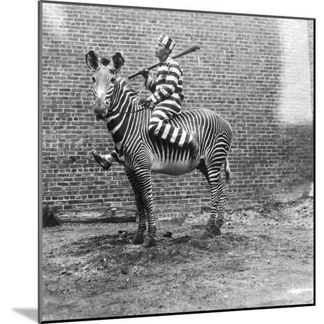 Comic Criminal Riding a Zebra--Mounted Photographic Print