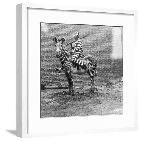 Comic Criminal Riding a Zebra--Framed Art Print