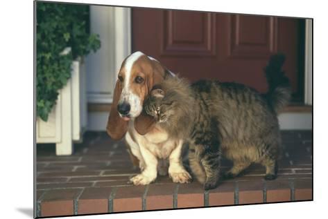 Cat Nuzzling Basset Hound-DLILLC-Mounted Photographic Print