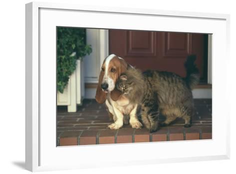 Cat Nuzzling Basset Hound-DLILLC-Framed Art Print