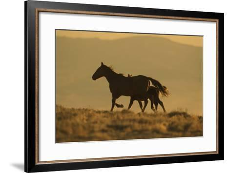 Wild Horse Mother and Foal-DLILLC-Framed Art Print