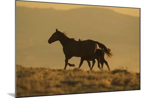 Wild Horse Mother and Foal-DLILLC-Mounted Photographic Print