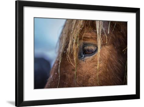 Portrait of Icelandic Horse, Iceland-Arctic-Images-Framed Art Print