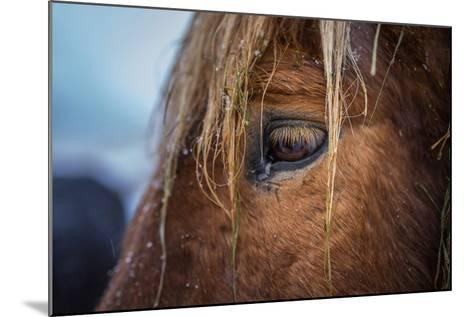 Portrait of Icelandic Horse, Iceland-Arctic-Images-Mounted Photographic Print