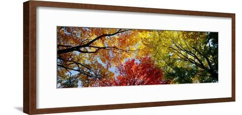 Colorful Trees in Fall, Autumn, Low Angle View--Framed Art Print