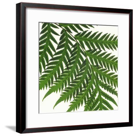Sword Fern Frond-DLILLC-Framed Art Print