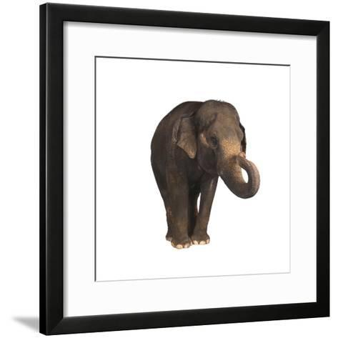 Indian Elephant-DLILLC-Framed Art Print